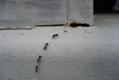 Os Melhores Conselhos da Vovó - formigas, rato, gelo