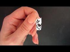 murena frivolite - YouTube
