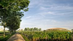 Image 3 of 7 from gallery of Foster+Partners Reveal Conceptual Design for Winery in Saint-Émilion, France. Photograph by Foster + Partners Chateau Margaux Wine, New Taipei City, Saint Emilion, Weathering Steel, Foster Partners, France 3, Timber Roof, Rammed Earth, Conceptual Design