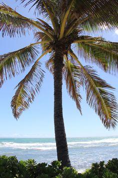 Lesbian Isle Of Palm Retirement Towns