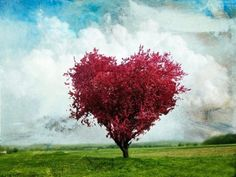 Cool heart shaped tree