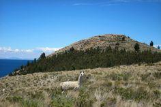 Llama in peruvian andes | SIGHTSOULS | Yuri Torres.jpg