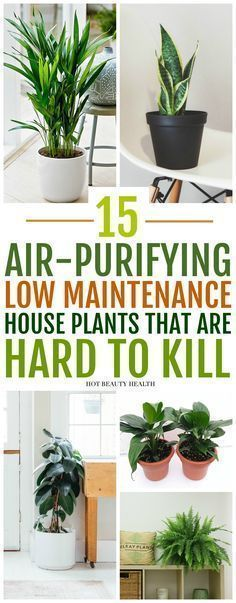 The best air purifying plants that are super low maintenance and hard to kill. ( gerbera daises, snake plants, peace lily, boston ferns, and more) Many need only low light and are also pet safe. Inside Plants, Cool Plants, Small Plants, Green Plants, Good Plants For Indoors, Best Plants For Home, Home Decor With Plants, Nature Home Decor, Popular House Plants