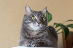 """A female cat is also referred to as a """"queen"""" or a """"molly."""""""