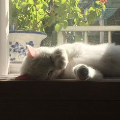 Discovered by mandy. Find images and videos about cute, cat and animal on We Heart It - the app to get lost in what you love. I Love Cats, Crazy Cats, Cool Cats, Animals And Pets, Baby Animals, Cute Animals, Gatos Cats, Cute Creatures, Cats And Kittens