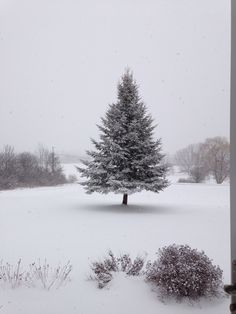 Tree in Snow Storm
