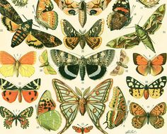1897 Papillons d'Europe Planche Originale par sofrenchvintage
