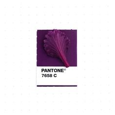 Graphic designer Inka Mathew explores the colorful world around her by matching tiny objects with corresponding Pantone swatches in a series called Tiny Pantone Swatches, Color Swatches, Purple Rain, Color Patterns, Color Schemes, Pantone Matching System, Color Harmony, Purple Aesthetic, Color Of The Year