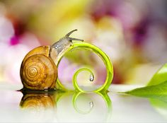 Snail - Caracol