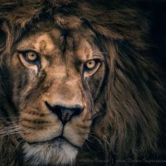 Sometimes you should remind people that there's a lion inside