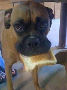 Will you butter my toast, please...