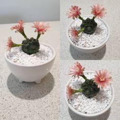 Succulents Garden, Cactus, Instagram, Plants, Cactus Plants, Planters, Plant, Planting
