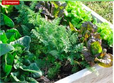 Create raised beds and increase productivity in the small garden! Building Raised Beds, Raised Garden Beds, Increase Productivity, Easy Garden, Small Gardens, Growing Vegetables, Garden Paths, Agriculture, Vegetable Garden