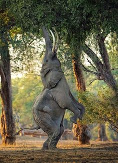 ******************************************** - Pixdaus -The performing elephant??!!