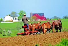 The local Amish community reminds us of what life was like in a simpler time. CLICK HERE for more about Ohio's Amish Country at www.OACountry.com! #Amish #Ohio #Tourism