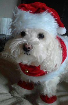 Cute little Santa. ❤️