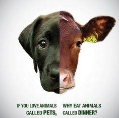 vegan. : Photo