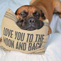 Your pets sure do!
