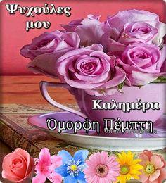 Rose, Flowers, Plants, Sunday, Google, Greek, Pink, Domingo, Plant