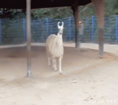 Top 15 Funniest GIFs of All Times #funny #gifs