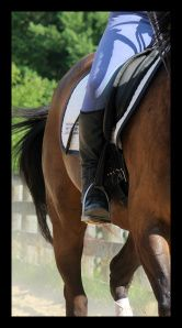 Why you don't need to force your heels down in riding.