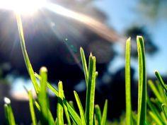 Happiness Is Simple: 5 Reasons - http://www.sochicken.com/self/happiness-is-simple-5-reasons.html