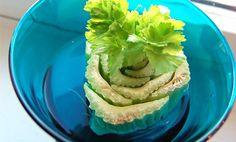 3 grønnsaker du kan re-dyrke i vinduskarmen Outdoor Projects, Lettuce, Agriculture, Cabbage, Vegetables, Planting, Ethnic Recipes, Garden Ideas, Food
