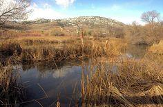 Grass, Swamp & Snow - Osoyoos Bird Sanctuary.