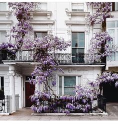 Climbing Wisteria in London Beautiful Buildings, Beautiful Homes, Beautiful Places, London House, London Townhouse, Wisteria, Exterior Design, Planting Flowers, Beautiful Flowers