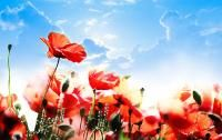 What does it mean to wear a poppy if you have never seen a battlefield or lost someone to war? As Remembrance Day fast approaches. Poppies Tattoo, Water Birth, Joy Of The Lord, Remembrance Day, Garden Of Eden, Fb Covers, Timeline Covers, Natural Birth, Cover Photos