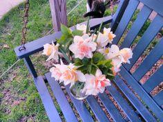 Delicate daffodils