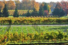Niagara on the Lake Winery.  Easily accessible from Waterview Condominiums in Grimsby.