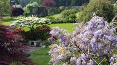 This year's Glanusk Estate Fayre and NGS Open Gardens is taking place on Sunday 21st May 2017 from 11am to 4pm and we are delighted that ITV's Ruth Wignall will be officially opening the event at 11am. We will also be joined by BBC Radio 2's favourite Allotmenteer Terry Walton, Dryad Bushcraft and ITV's Andrew Price and BBC Radio Wales regular and Barefoot Runner Lynne Allbutt before she dashes off to Chelsea Flower Show.