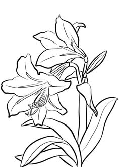 amaryllis coloring pages - photo#18