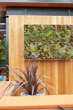 All-in-one succulent garden kit