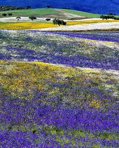 Alentejo in the spring, Portugal