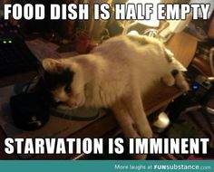 How every cat thinks
