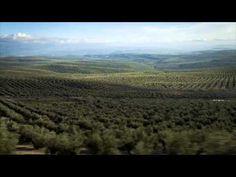 Oleoturismo en Jaén / Tourism to discover olive oil in Jaén