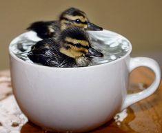 Tea Cup Bath Time! So cute!