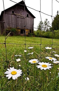 Photo (Inspiration Lane) Daisies…Barn… Fence – Country Living More - Modern Country Barns, Country Life, Country Living, Country Roads, Country Charm, Farm Barn, Old Farm, Country Scenes, Farms Living