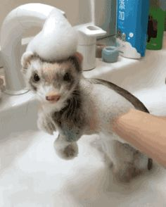 """That ferret is just like """"oh, dandy in here"""""""