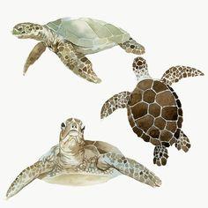 Watercolor Mermaid, Watercolor Animals, Watercolor Paintings, Sea Turtle Art, Baby Sea Turtles, Underwater Plants, Underwater Art, Turtle Background, Plant Painting