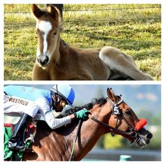 Goldencents as a foal and Goldencents winning the 2013 Santa Anita Derby