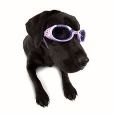 $15.83-$0.00 Doggles ILS are the first and only protective eyewear designed just for dogs. 15 Years of experience has made our Doggles ILS (Interchangeable Lens System) the very best in pet eyewear. For eye protection or fashion, ask for it by name. Sizing: To determine proper size, measure the entire head circumference across the eyes around the entire head under the ears. To determine proper ch ...