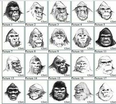 Sassquatch Bigfoot