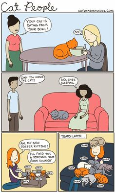 cat versus human [OK, not quite me, as I have found homes for all of my kitten fosters (the adults, not so much), so, dang, can I ever relate!!!]