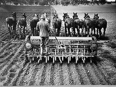 A 9-horse team abreast pulling an H.V. McKay 16 row 'Sunshine' seed drill in muddy conditions. (disc scrapers are fitted either side for clearing the mud from the wheels). H.V. McKay Massey Harris, Farm Equipment Manufacture Field Trials, Natimuk, Victoria, June 1938