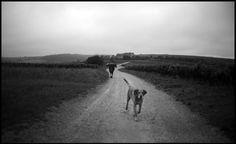 Mann und Hund beim Regenspaziergang im Burgund