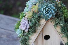 http://www.amazon.com/DIY-Succulents-Placecards-Creative-Projects/dp/1440588082/ref=sr_1_1?ie=UTF8&qid=1441385317&sr=8-1&keywords=DIY+Succulents