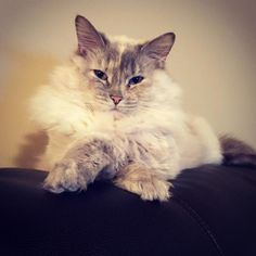 Queen of kitties - http://cutecatshq.com/cats/queen-of-kitties/